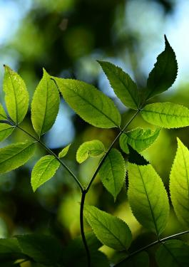 iso 14001 leaves 2